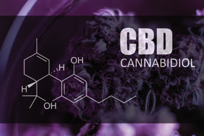 CBD cream or oil: Which one is best for you?